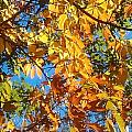 The Dazzling Colors Of Fall by Sylvia Herrington