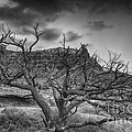 The Dead Pinion Tree Hdr Bw by Mitch Johanson