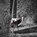 The Deer by Jost Houk