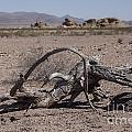 The Desert Floor by Amber Kresge