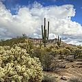 The Desert Southwest by Saija  Lehtonen