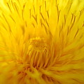 The Detail Is In The Dandelion by Kathy Paynter