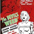 The Devils Weed, Aka Wild Weed, Aka She by Everett