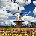 The Dezwaan Dutch Windmill Among The Tulips On Windmill Island In Holland Michigan by Randall Nyhof