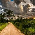 The Dirt Road by Andrew Matwijec