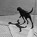 The Dog -and The Cat- by Osvaldo Hamer