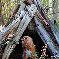 The Dog In The Teepee by Davandra Cribbie