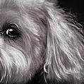 The Dog Next Door by Bob Orsillo