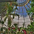 The Dome 001 Buffalo Botanical Gardens Series by Michael Frank Jr