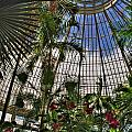 The Dome 002 Buffalo Botanical Gardens Series by Michael Frank Jr