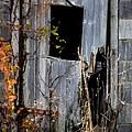The Door by William Jobes