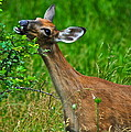 The Dreaded Deer Giraffe by Frozen in Time Fine Art Photography