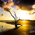 The Driftwood Tree Folly Beach by Donnie Whitaker