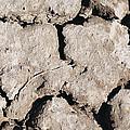 The Drought by Ramunas Bruzas