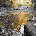 The Dry Creek Bed by Jeffery L Bowers
