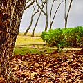 The Dry Season by Douglas Barnard