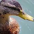 The Duck by Milena Ilieva