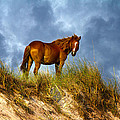 The Dune King by Betsy Knapp