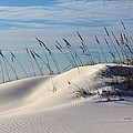 The Dunes Of Destin by JC Findley
