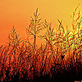 The Dunes by Steve Harrington