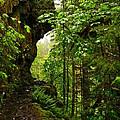 The Eagle Creek Trail by Jeff Swan