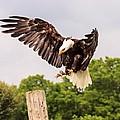 The Eagle Is Landing by Jim Koniar