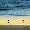 The Early Birds by Ellen Cotton
