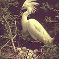 The Egret Bird - Vintage Style