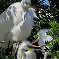 The Egret Family by Jennie Breeze