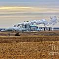 The Ethanol Plant by M Dale