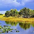 The Everglades by Barbara Zahno
