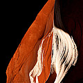 The Eye Of Lower Antelope Canyon by Ed  Riche