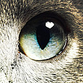 The Eye Of The Russian Blue by Natasha Marco