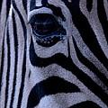 The Eye Of The Zebra by Eric Tressler
