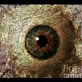 The Eyes 12 by Holley Jacobs