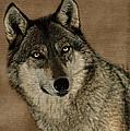 The Eyes Of A Grey Wolf by Dan Friend