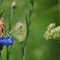 The Faerie And The Cabbage Butterfly by Broken  Soldier