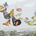 The Fairy Queen's Carriage by Richard Doyle