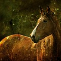 The Fairytale Horse by Angel Ciesniarska
