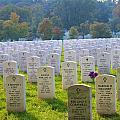 The Fallen by Candi Davidson