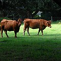 The Farm by Greg Patzer