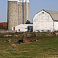 The Farm In Autumn by Kay Novy