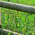 The Fence At The Meadow by Mary Deal