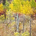 The Fence Line by Image Takers Photography LLC - Laura Morgan