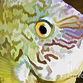The Fish by Deborah Benoit