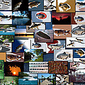 The Fishing Hole Collage Rectangle by Thomas Woolworth