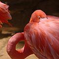 The Flamingo Wakens by Jeff Swan