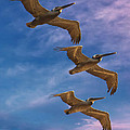 The Flight Of The Pelican by Lena  Owens OLena Art