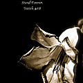 The Flower Fadeth by Debbie Nobile