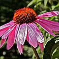The Flower by Mark Prescott Crannell